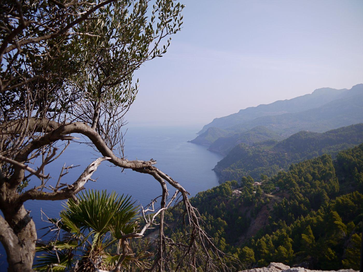 Berge von Mallorca und Baum im Vordergrund - (c) Jasmin Grigutsch